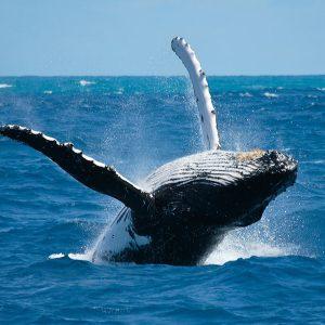 Avistamiento-de-ballenas_7